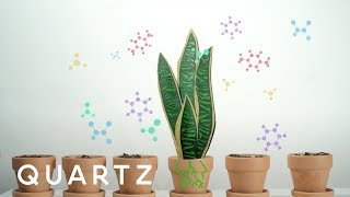Download A NASA study explains how to purify air with house plants Video