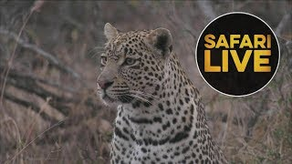 Download safariLIVE - Sunrise Safari - August 2, 2018 Video