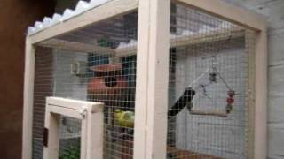 Download How to make your own bird cage or mini aviary Video