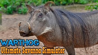 Download Ultimate Savanna Simulator #Warthog By Gluten Free Games Action & Adventure iTunes/Android Video