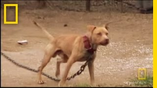 Download Underground Dogfighting | National Geographic Video