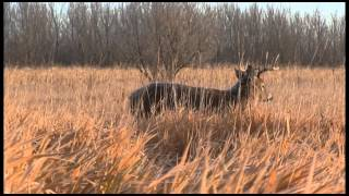 Download Why You Should Hunt From a Ground Blind - Deer Hunting Video