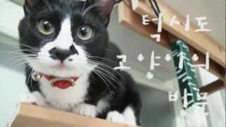Download 턱시도 고양이의 방문 Video