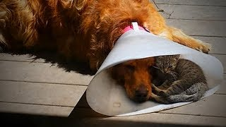 Download Cute Cats and Dogs 😻🐶 Cats and Dogs Friendship (Part 1) [Funny Pets] Video