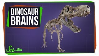 Download Where Are All the Dinosaur Brains? Video