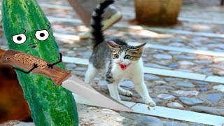Download Cats scared of Bananas And Cucumbers - Cats Vs Cucumbers - Cats Vs Bananas - Funny Cats 2017 Video