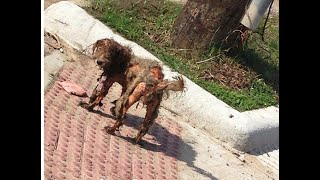 Download Homeless Dog Rescued - AMAZING TRANSFORMATION! A happy ending heartwarmer. Get your tissues ready! Video