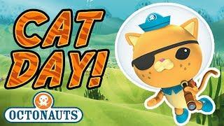 Download Octonauts - It's Cat Day | Kwazii's Best Moments! Video