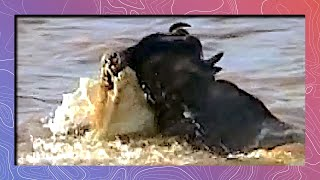 Download Nose Gaiter | Crocs Attack Wildebeest Video