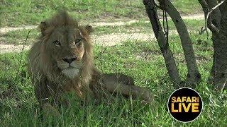Download safariLIVE - Sunset Safari - February 16, 2019 Video