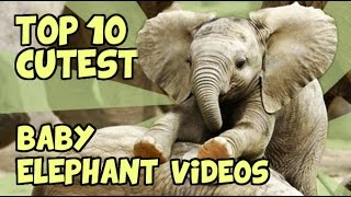 Download TOP 10 CUTEST BABY ELEPHANTS OF ALL TIME Video