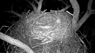 Download Big Bear Bald Eagle Nest Video