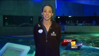 Download Shark! Behind the scenes at the National Aquarium Video
