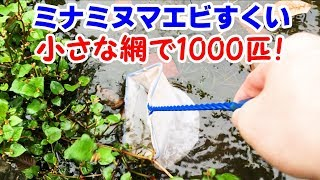 Download 沼でエビすくい 1000匹! エビ水槽立ち上げ!【日淡水槽2018#49】 Video