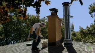 Download Not-so-Sweet Honey Bee Invasion | Infested! Video