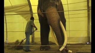 Download Vorschau: Colonel Joe der Elefantenbulle (Nr. 132) Video