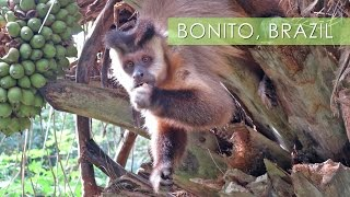 Download Bonito, Mother Nature's Playground - Travel Deeper Brazil (Ep. 11) Video