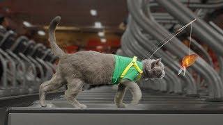 Download Pet Peeves Gym Video