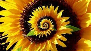Download Decoding the Secret Patterns of Nature - Fibonacci Ratio & Pi - Full Documentary Video