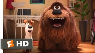 Download The Secret Life of Pets - The Owners Return Scene (10/10) | Movieclips Video