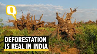 Download Deforestation is Real and India is Reeling Under it Video