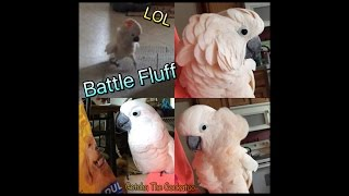 Download Battle Fluff Engaged | I guess dog food bags are scary lol Video
