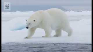 Download 地球温暖化を防ぐ(動画シリーズ:2分でわかる!世界の自然を守るWWFの活動) Video
