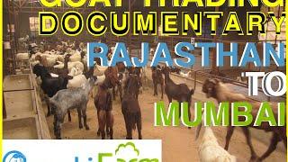 Download Full Documentary on Eid Goats & journey from Rajasthan to Deonar Mandi, Mumbai Video