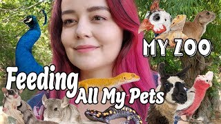 Download Feeding All My Pets | My Zoo Routine 2019 Video