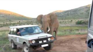 Download Elephant charging Video