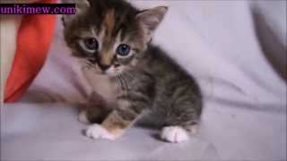 Download Little Kitten Is Scared Without His Mama! Video