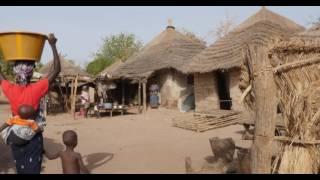Download تعزيز المجتمعات الحرجية في غامبيا Video