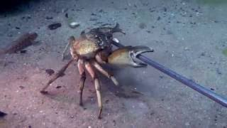 Download ... Чёрное море моё... дайвинг Video