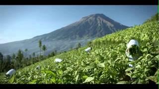 Download Djarum Coklat - Kretek Video