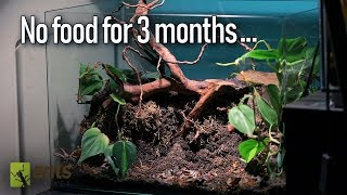 Download How My Ants Remarkably Survived a Famine Video