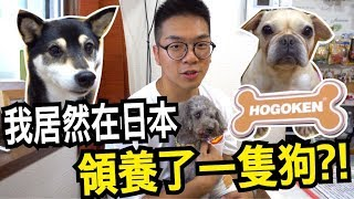 Download 【雞腿的日本留學生活#9】我居然在日本領養了一隻狗?請以領養代替購買!【日本流浪犬咖啡廳 HOGOKEN CAFE】 Video
