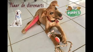 Download Dierenarts update - vlog 114 Video
