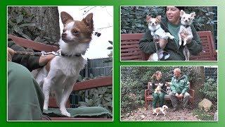 Download Hundevermittlung - Oktober/November 2017 (Tierheim Hannover TV) Video