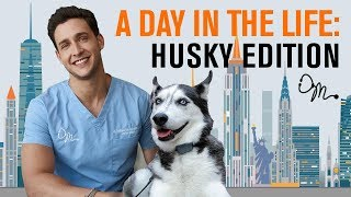 Download A Day in the Life: Siberian Husky Edition | Doctor Mike Video