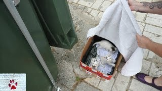 Download ″Oops″ - Rescue of a litter of kittens abandoned next to a garbage bin Video