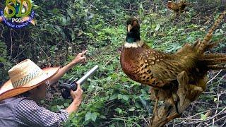 Download Mountain Pheasant || Cambodia Pheasant || The Beautiful Mountain Pheasant Video
