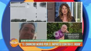 Download La furia del Dr. Romero por el episodio con el chancho arrojado desde un helicóptero Video