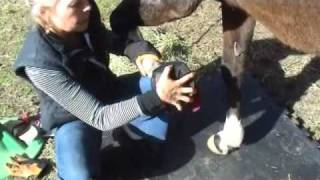 Download Horse Boots - Cavallo Sport Hoof Boot Fitting Video