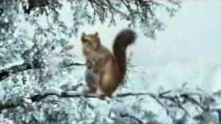 Download Farting Squirrel commercial A Fresh Air Explosion Video