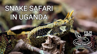 Download Snake Safari in Uganda (wildlife documentary by Living Zoology) Video