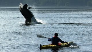 Download Amazing Orca Dolphins Leap from the Water | Deadly 60 | BBC Earth Video