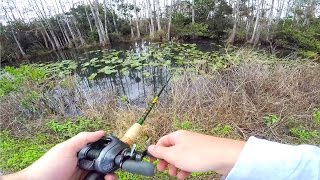 Download Roadside Canal Fishing in The Everglades Video