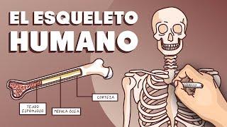 Download El esqueleto humano Video