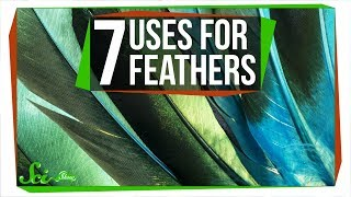 Download 7 Wacky Ways Birds Use Feathers Video