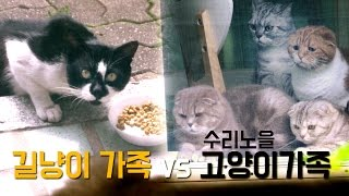 Download 수리노을 고양이 가족 VS 길냥이 가족 Suri&Noel Cats vs Street Cats [SURI&NOEL] Video